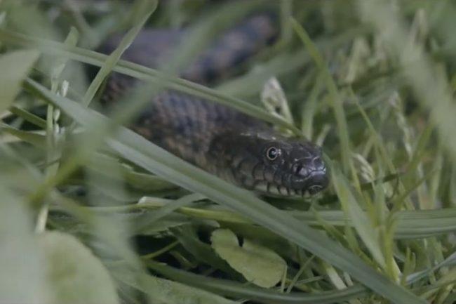 Не вбивайте змій!