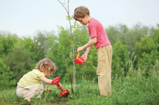 Саджайте дерева з розумом