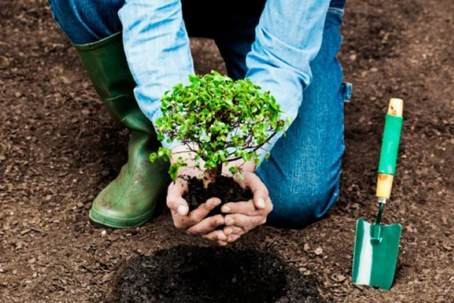 Рекомендації для тих, хто бажає долучатись до акцій з посадки дерев