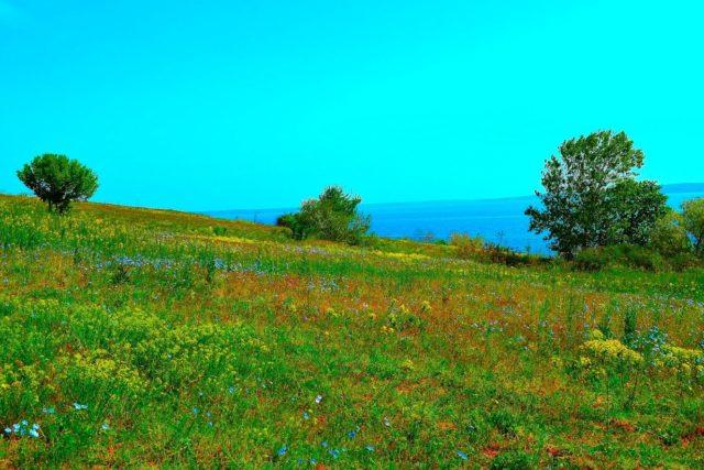 166 гектарів смарагдового степу врятовано від знищення!