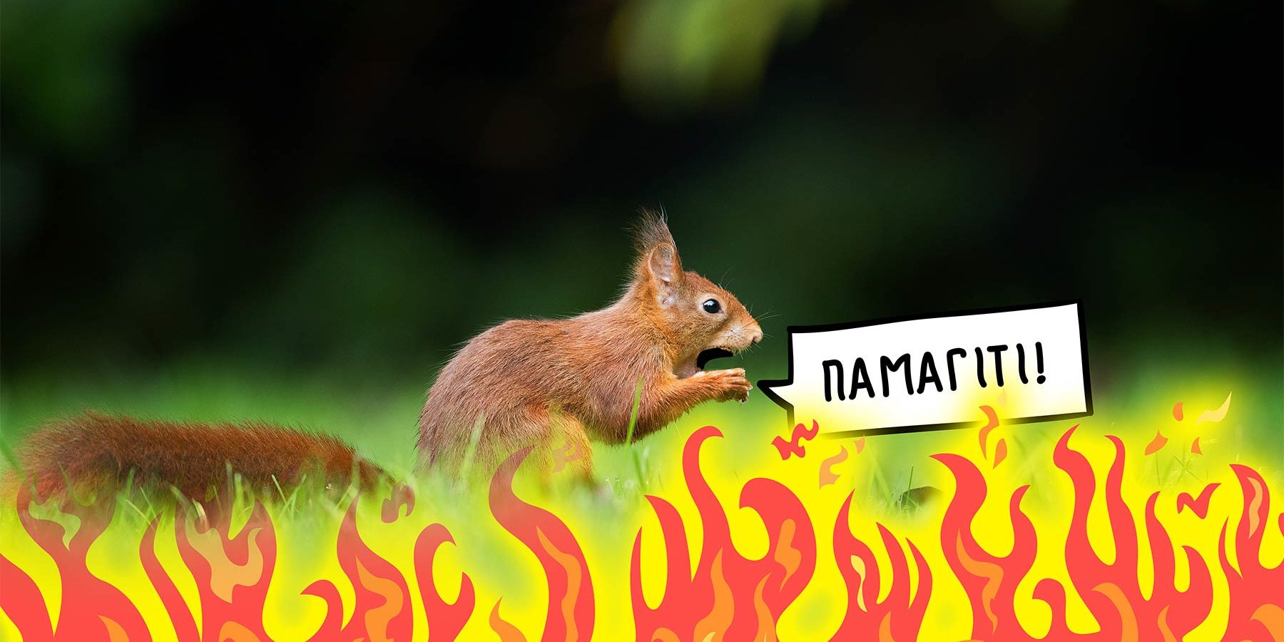 Через зміну клімату Україна може втратити 97% ареалу вивірки!